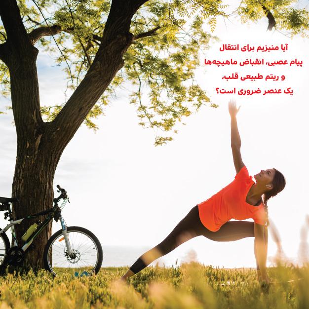 https://hakimanteb.com/wp-content/uploads/2020/12/post_hakimaan_aya_magnesum_baraye_enteghale_payame_asbi_29_9_99.jpg